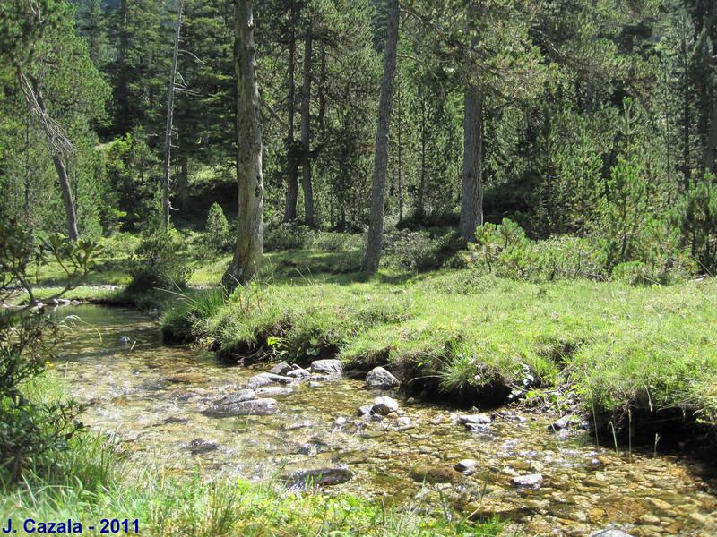 L'ombre des arbres et la fraicheur des ruisseaux du plateau