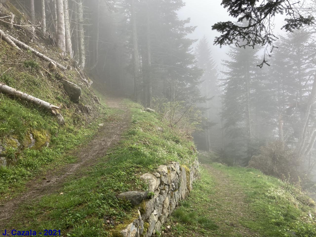 Montée vers le plateau du Lisey dans la brume